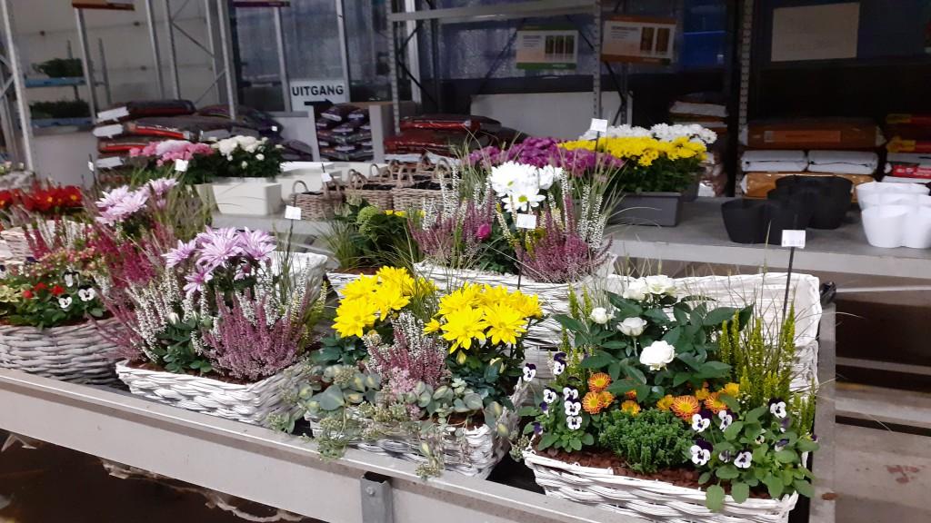 overzicht plantcombinaties 1