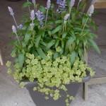 Prachtige eenvoud met savia sallyfun en hydrocotile