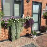 Wat een welkom! verbena, geranium, calli, sunpatiens, dichondra, streptocarpus, siergras, ..