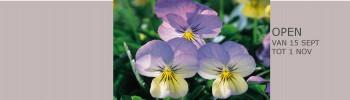 cropped-header-website-met-violen1.jpg